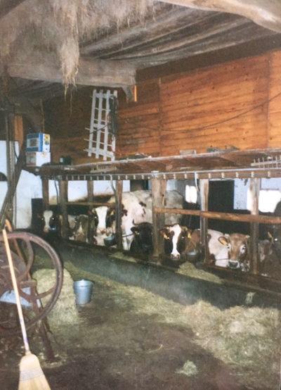 de deel als toekomstige woonzaal, nu nog met koeien